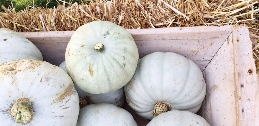 pumpkins-daylesford-organic-cotswolds